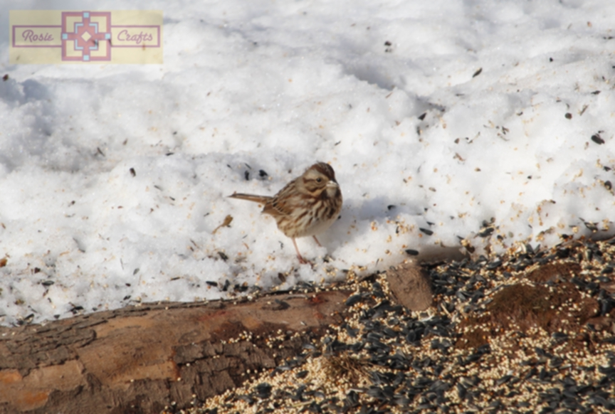 Rosie Crafts Sparrow Bird Eating in Winter Snow Photography