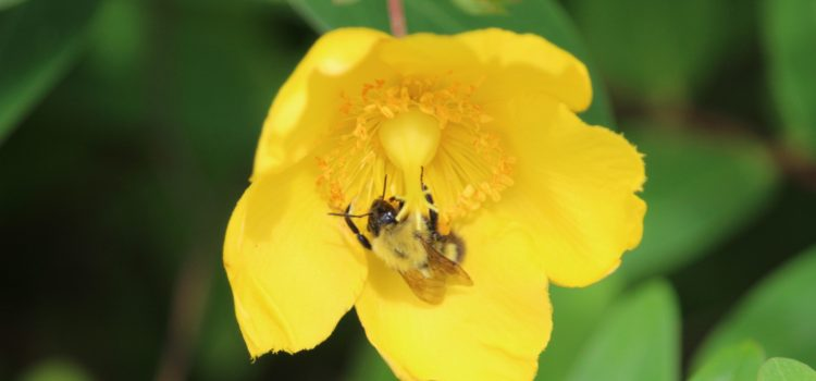 Rosie Crafts Bee Pollinating Flower Photography