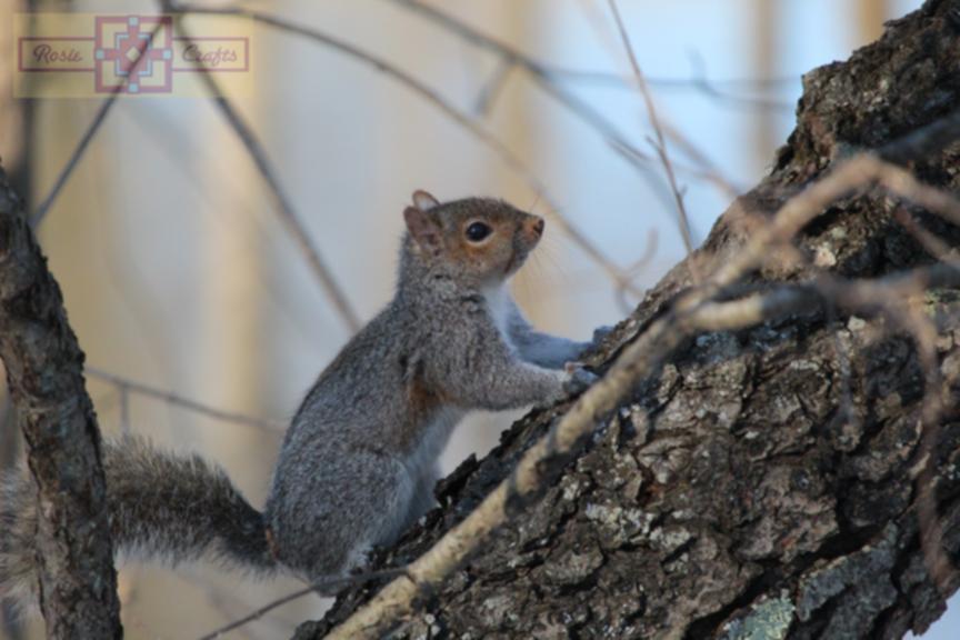 Rosie Crafts Squirrel Photography