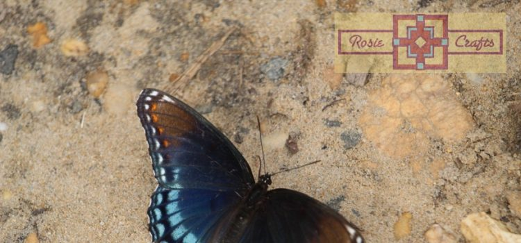 Rosie Crafts Red Spotted Admiral Purple Swallowtail Butterfly Photography