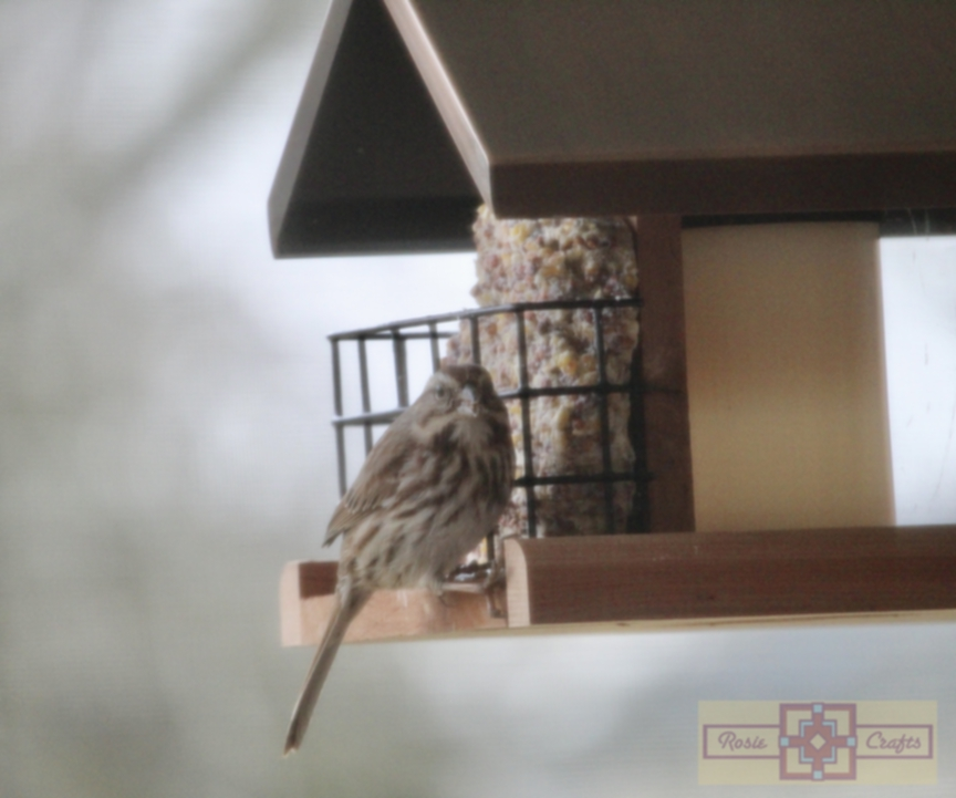 Rosie Crafts American Tree Sparrow Photography
