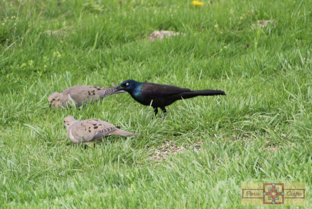 Rosie Crafts Grackle Bird Photography